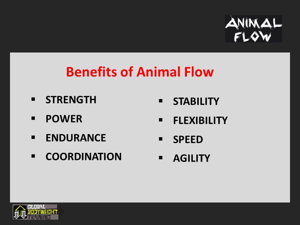 Benefits of Animal Flow