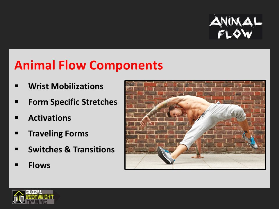 Animal Flow Components