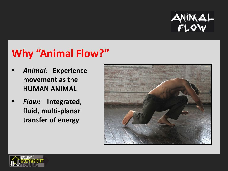 Why Animal Flow Animal: Experience movement as the HUMAN ANIMAL