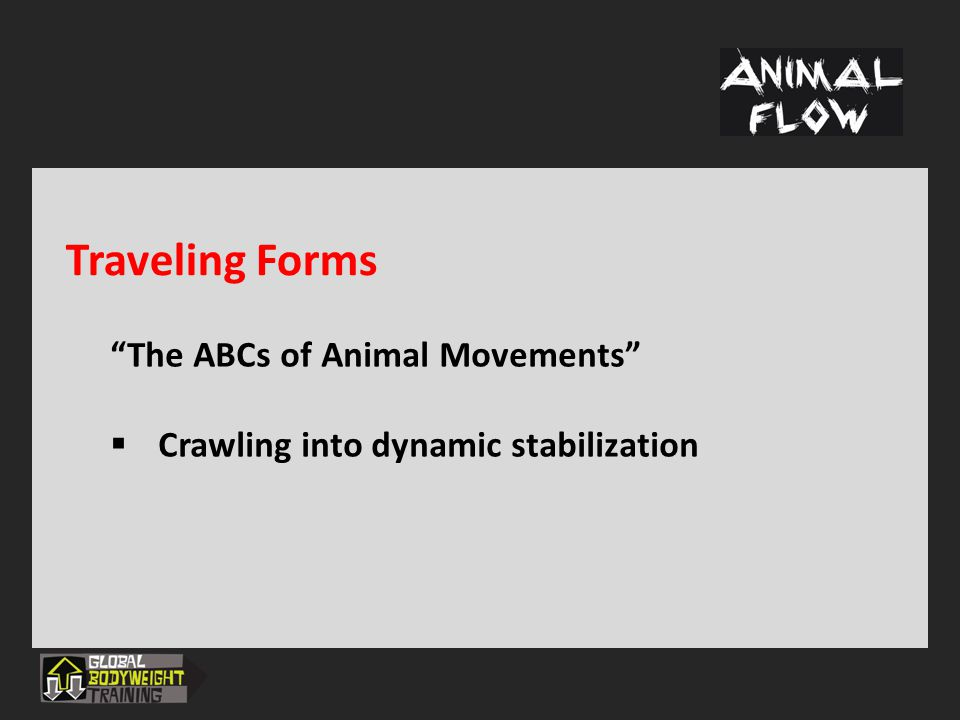 Traveling Forms The ABCs of Animal Movements