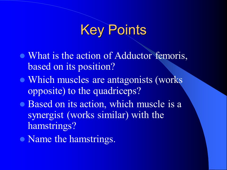 Key Points What is the action of Adductor femoris, based on its position Which muscles are antagonists (works opposite) to the quadriceps