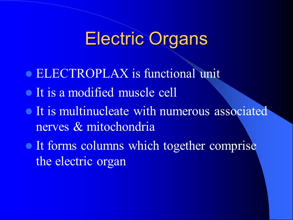 Electric Organs ELECTROPLAX is functional unit