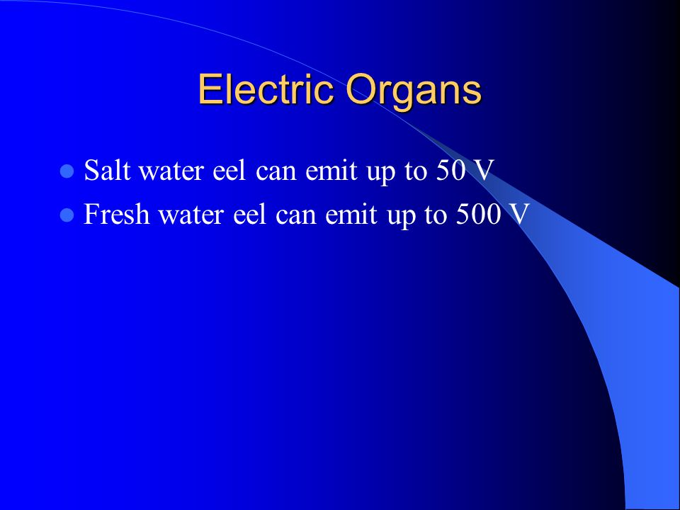 Electric Organs Salt water eel can emit up to 50 V