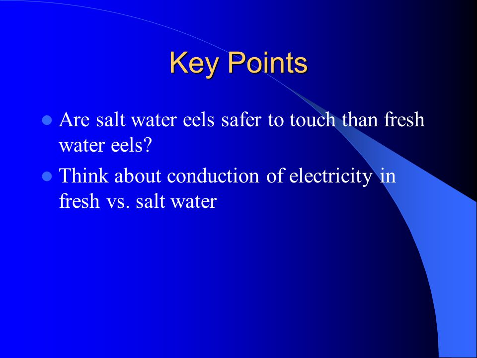 Key Points Are salt water eels safer to touch than fresh water eels