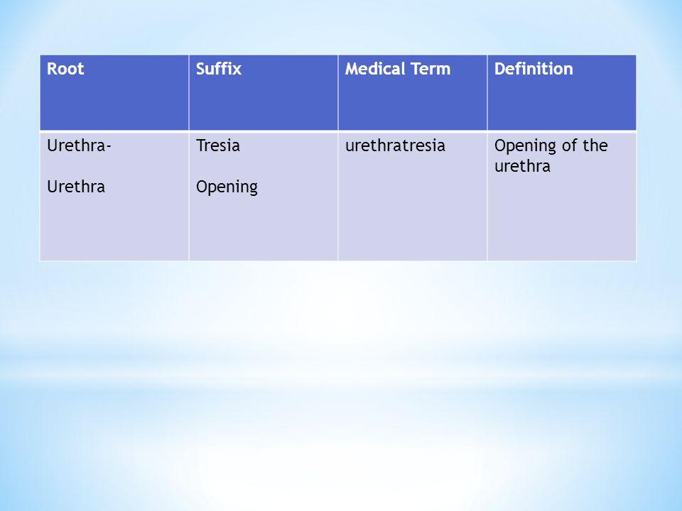Root Suffix. Medical Term. Definition. Urethra- Urethra.