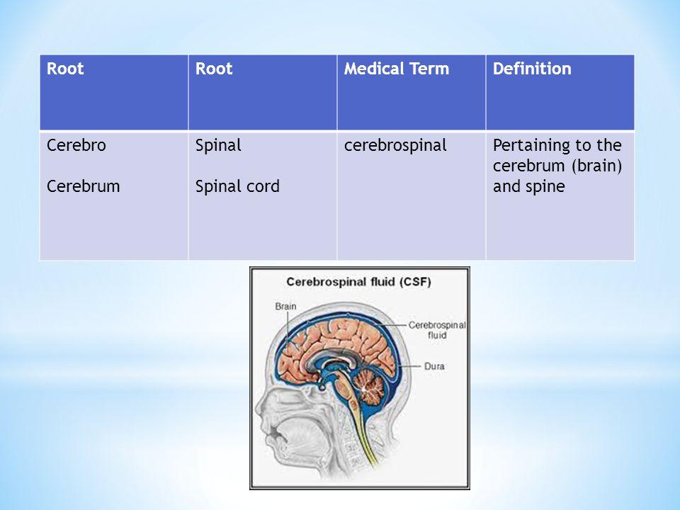 Root Medical Term. Definition. Cerebro. Cerebrum.