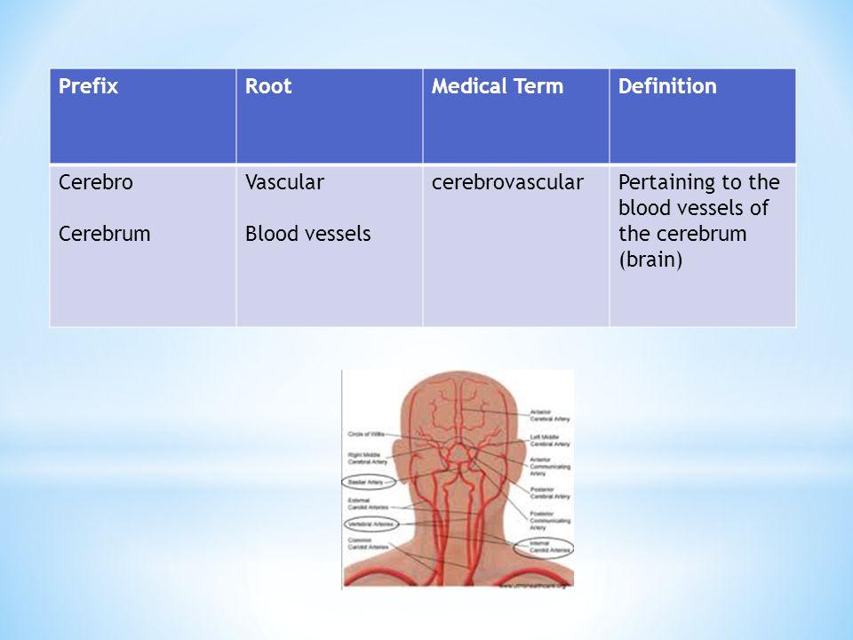 Prefix Root. Medical Term. Definition. Cerebro. Cerebrum. Vascular. Blood vessels. cerebrovascular.