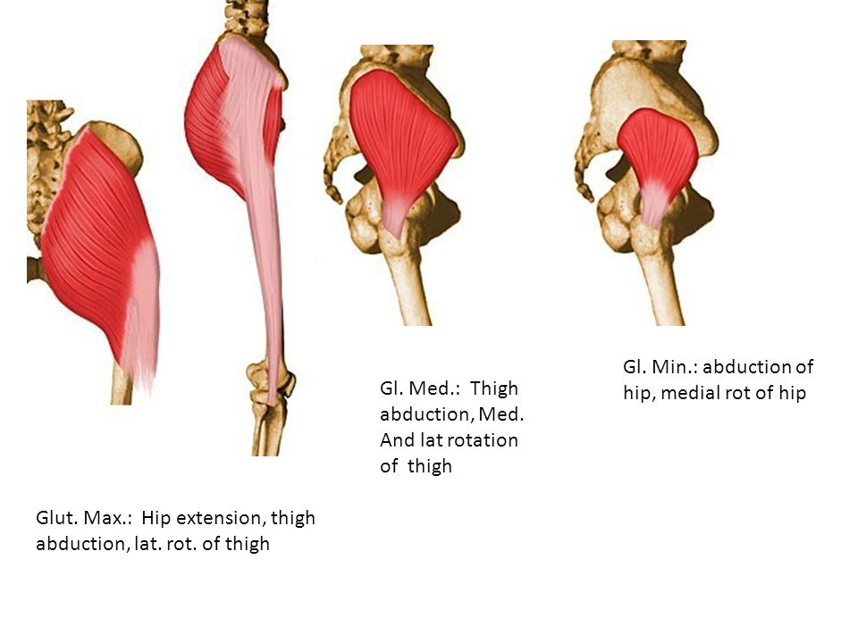 Gl. Min.: abduction of hip, medial rot of hip