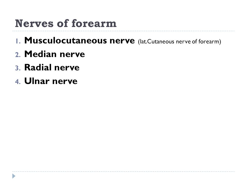 Nerves of forearm Musculocutaneous nerve (lat.Cutaneous nerve of forearm) Median nerve. Radial nerve.