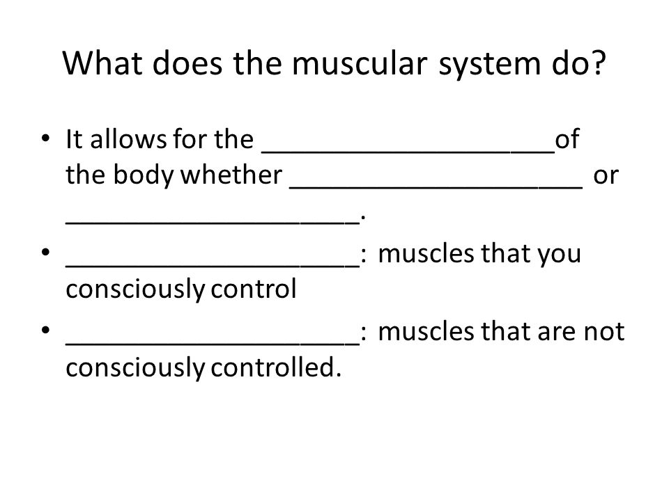 What does the muscular system do