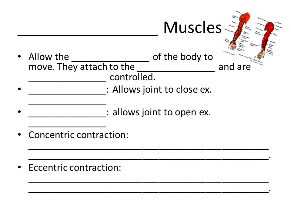 ________________ Muscles
