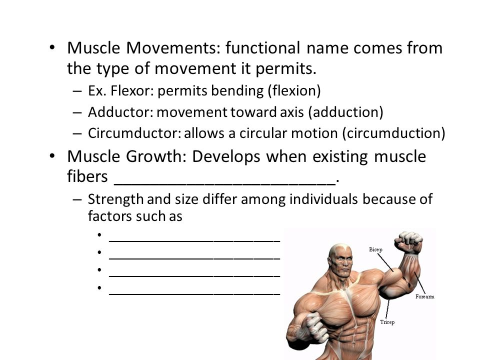 Muscle Movements: functional name comes from the type of movement it permits.