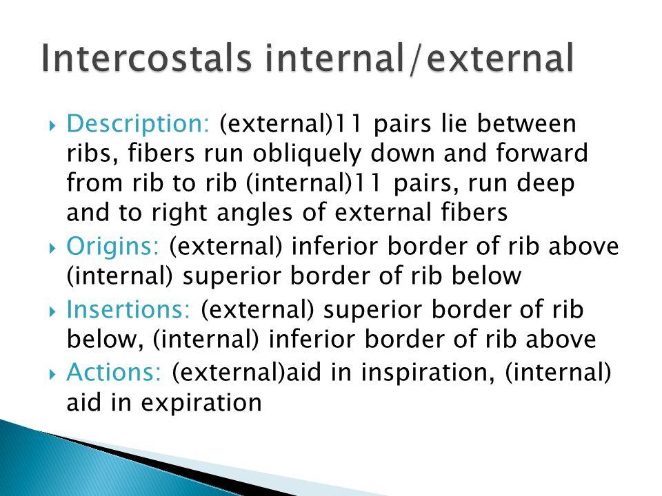 Intercostals internal/external