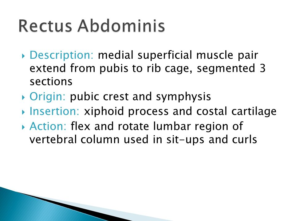 Rectus Abdominis Description: medial superficial muscle pair extend from pubis to rib cage, segmented 3 sections.