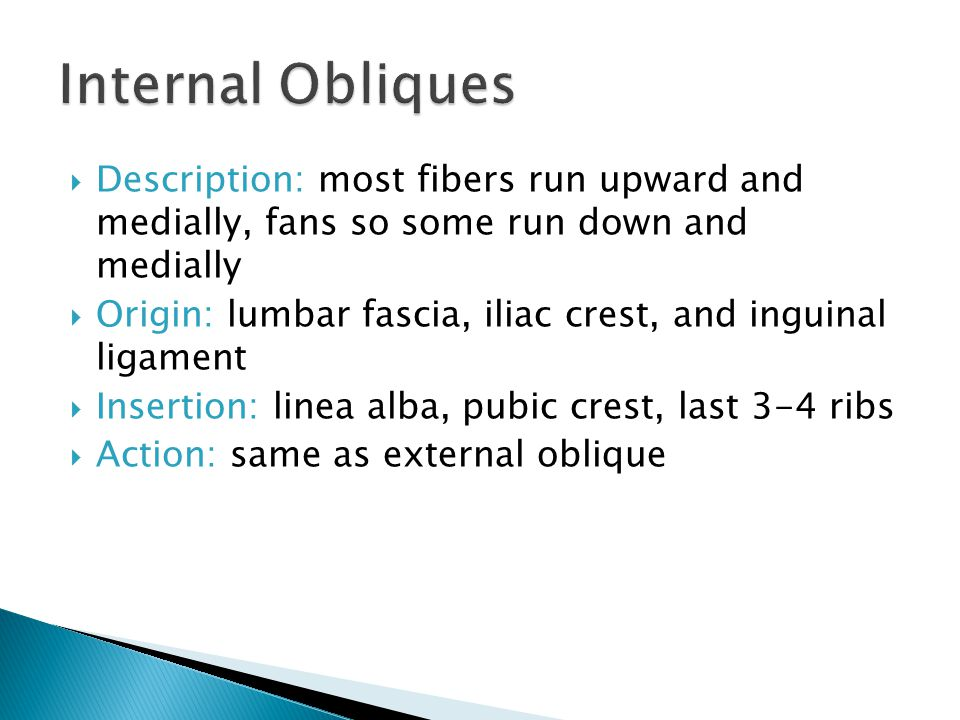 Internal Obliques Description: most fibers run upward and medially, fans so some run down and medially.