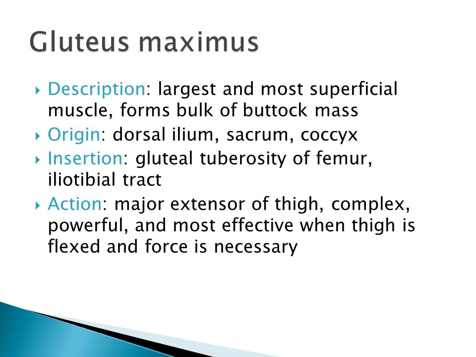 Gluteus maximus Description: largest and most superficial muscle, forms bulk of buttock mass. Origin: dorsal ilium, sacrum, coccyx.