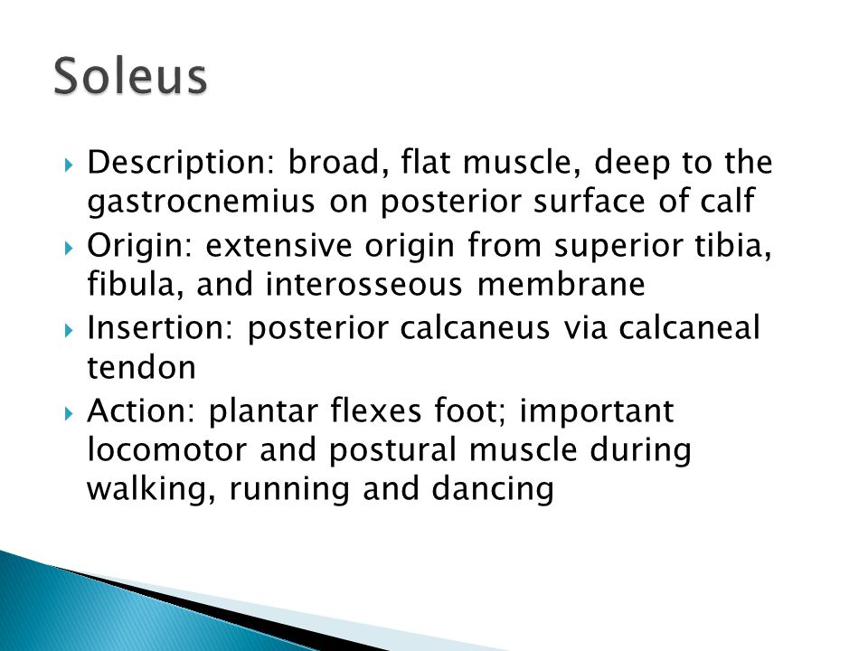 Soleus Description: broad, flat muscle, deep to the gastrocnemius on posterior surface of calf.