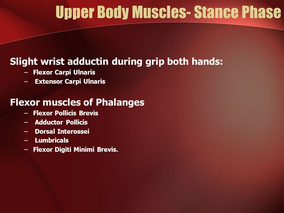 Upper Body Muscles- Stance Phase