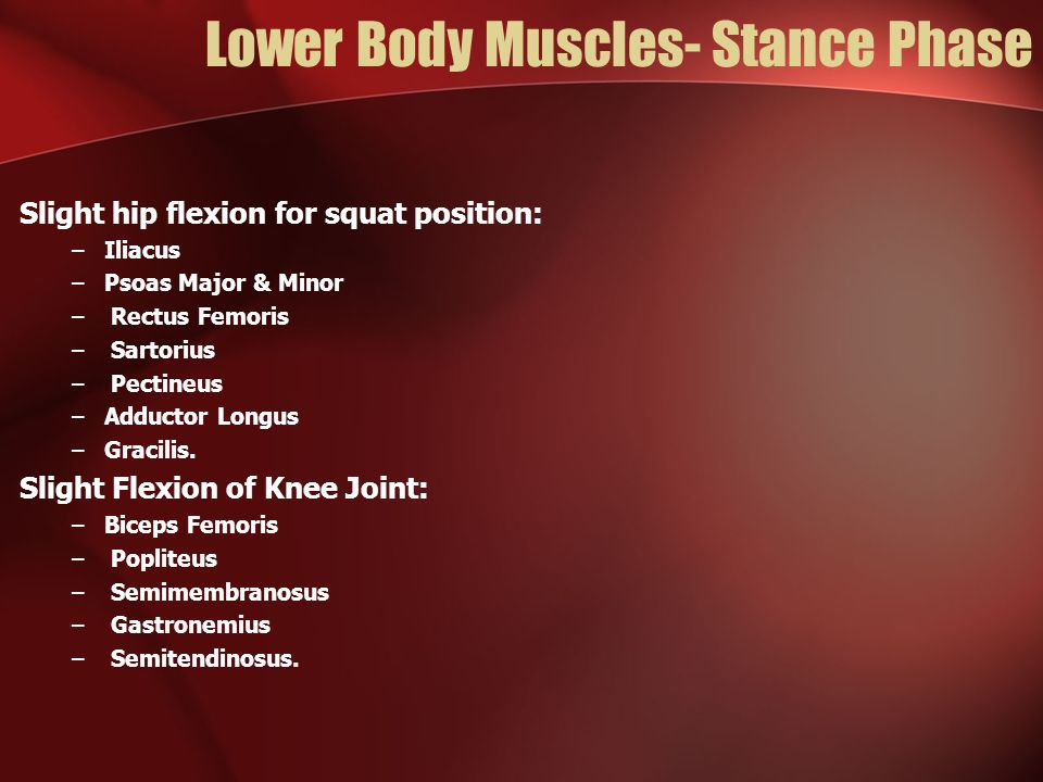Lower Body Muscles- Stance Phase