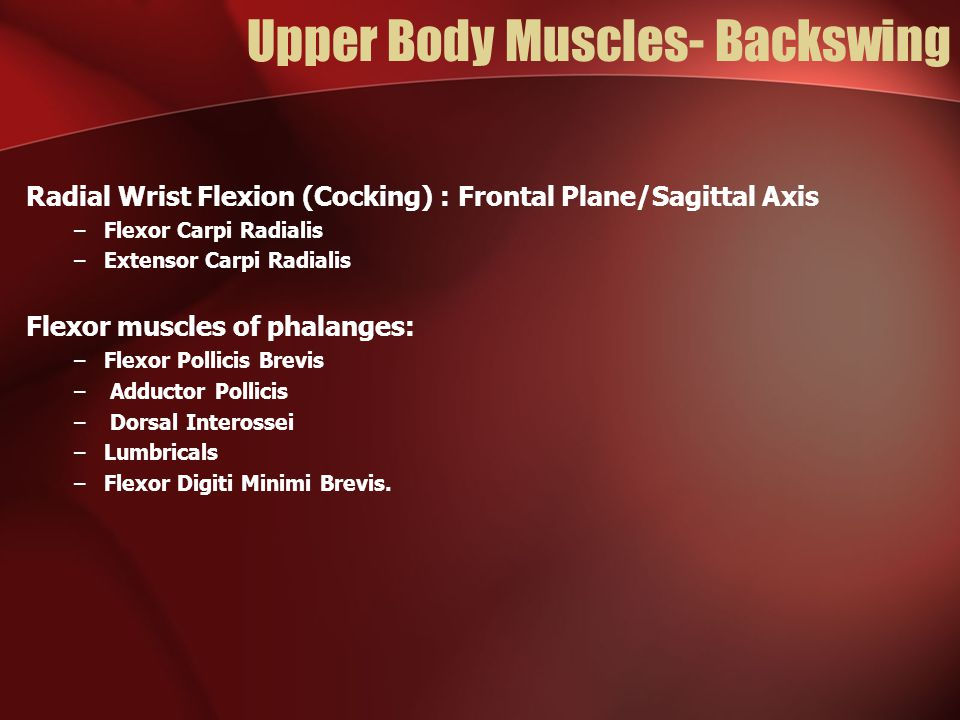 Upper Body Muscles- Backswing