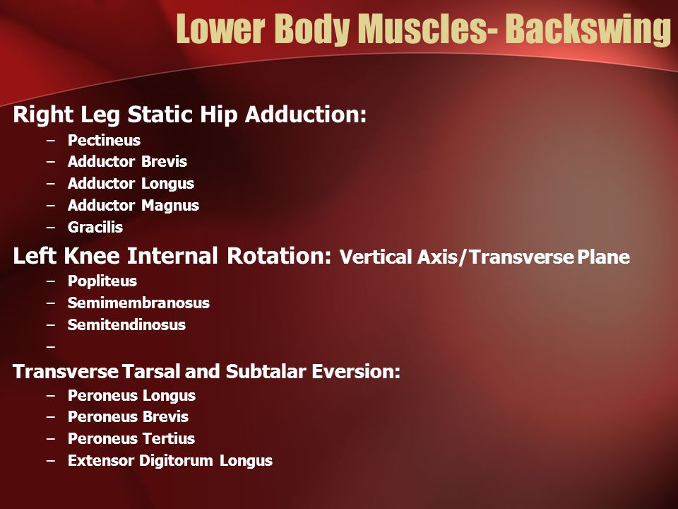 Lower Body Muscles- Backswing