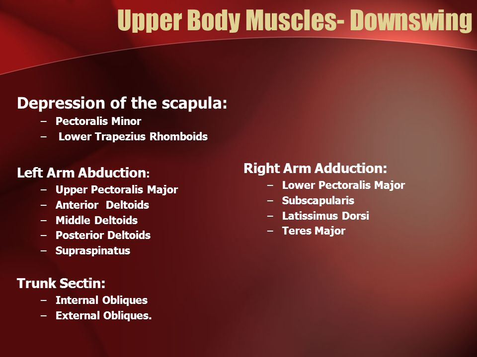 Upper Body Muscles- Downswing