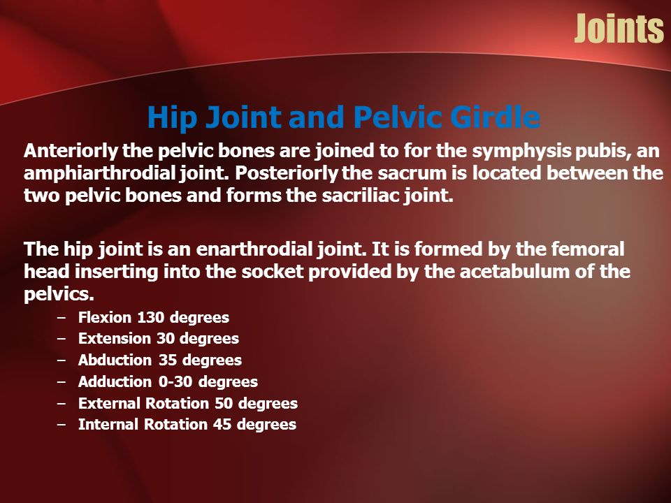 Hip Joint and Pelvic Girdle
