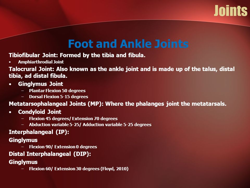 Joints Foot and Ankle Joints