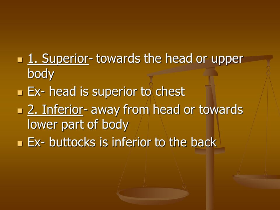 1. Superior- towards the head or upper body