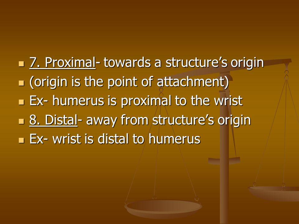 7. Proximal- towards a structure's origin
