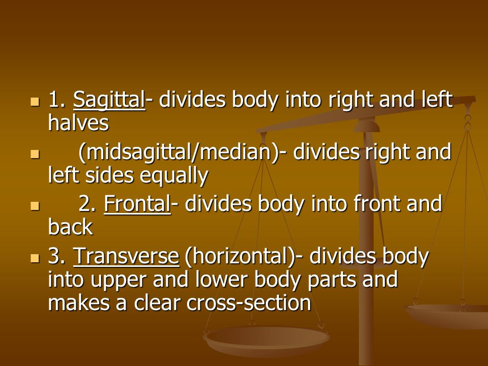 1. Sagittal- divides body into right and left halves