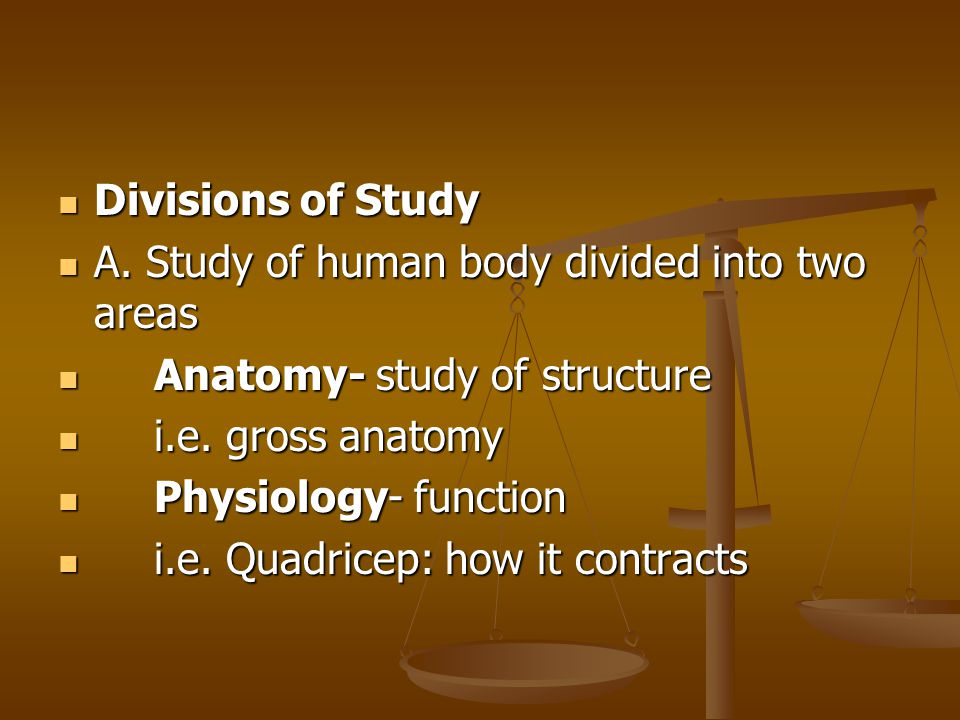 Divisions of Study A. Study of human body divided into two areas. Anatomy- study of structure. i.e. gross anatomy.
