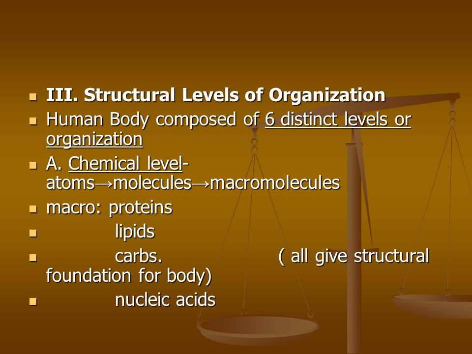 III. Structural Levels of Organization