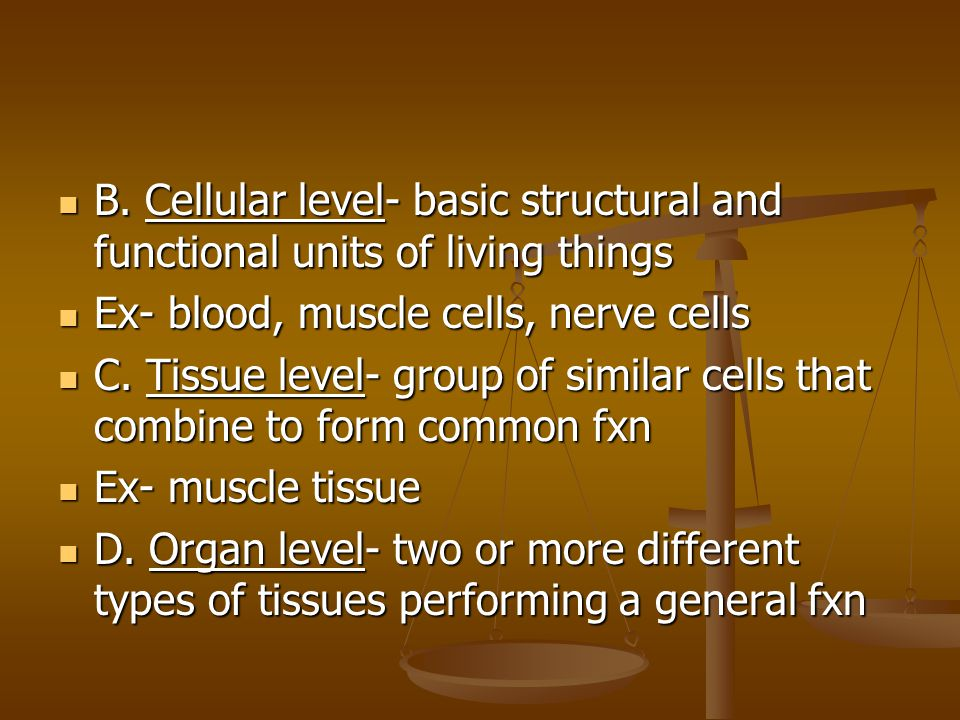 B. Cellular level- basic structural and functional units of living things