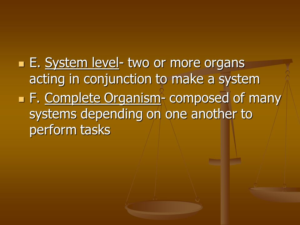 E. System level- two or more organs acting in conjunction to make a system