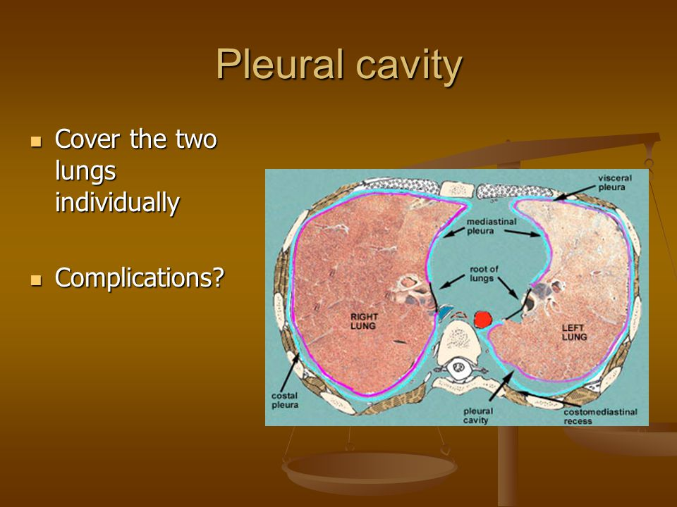 Pleural cavity Cover the two lungs individually Complications