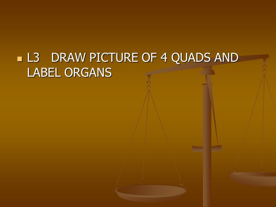 L3 DRAW PICTURE OF 4 QUADS AND LABEL ORGANS