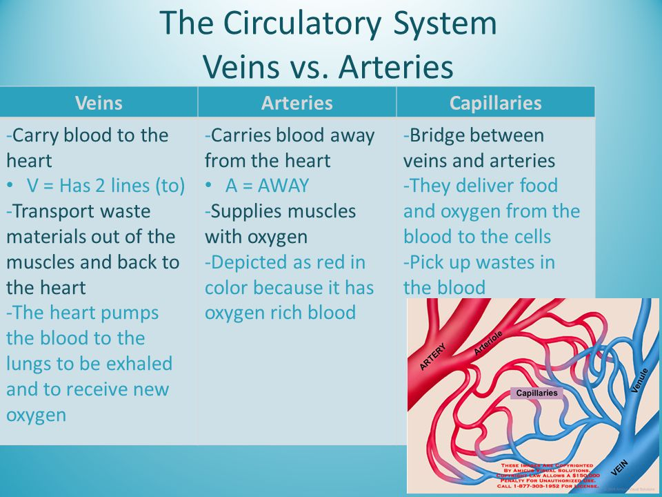 The Circulatory System Veins vs. Arteries