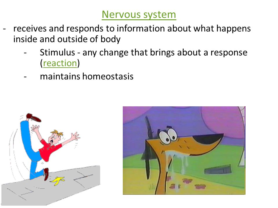 Nervous system receives and responds to information about what happens inside and outside of body.