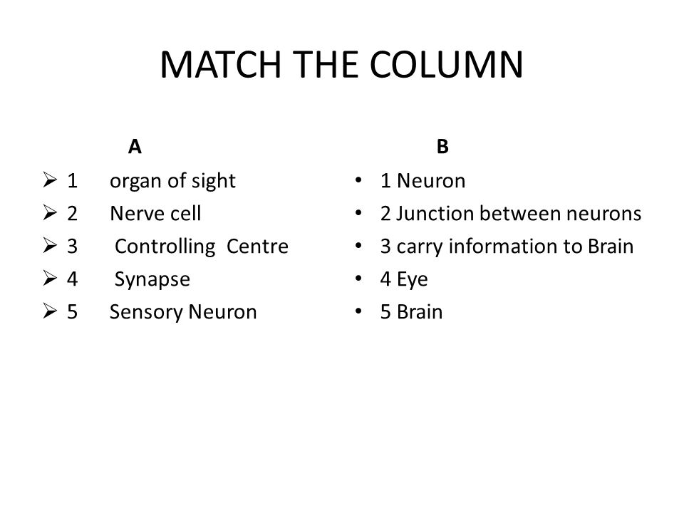 MATCH THE COLUMN A B 1 organ of sight 2 Nerve cell