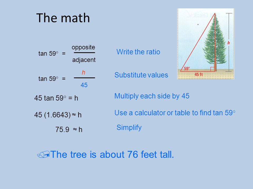 The math The tree is about 76 feet tall. Write the ratio