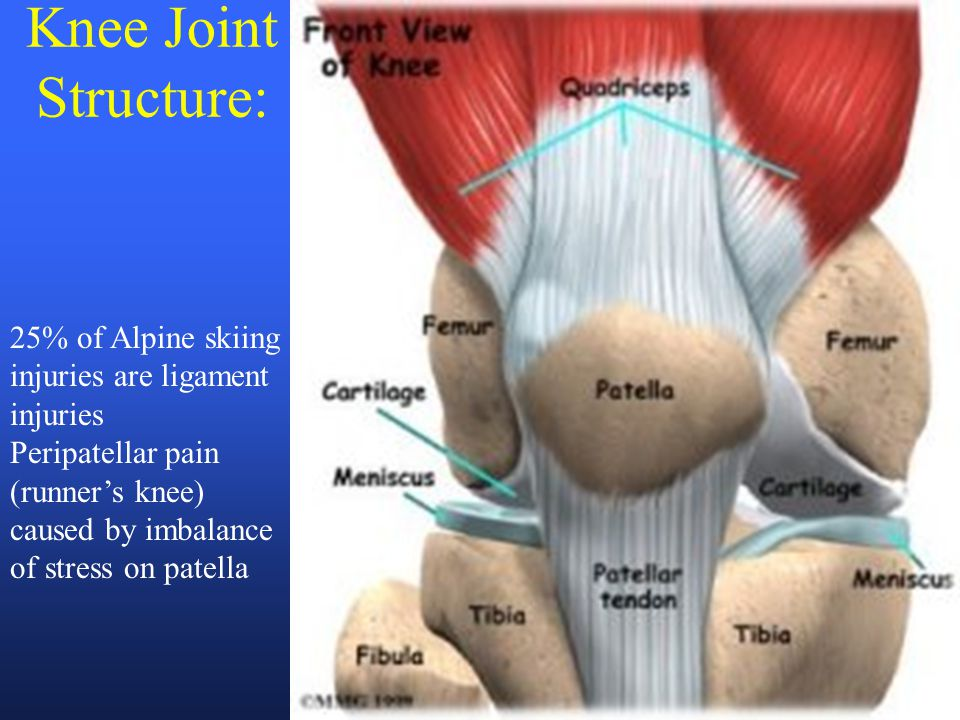 Knee Joint Structure: 25% of Alpine skiing injuries are ligament
