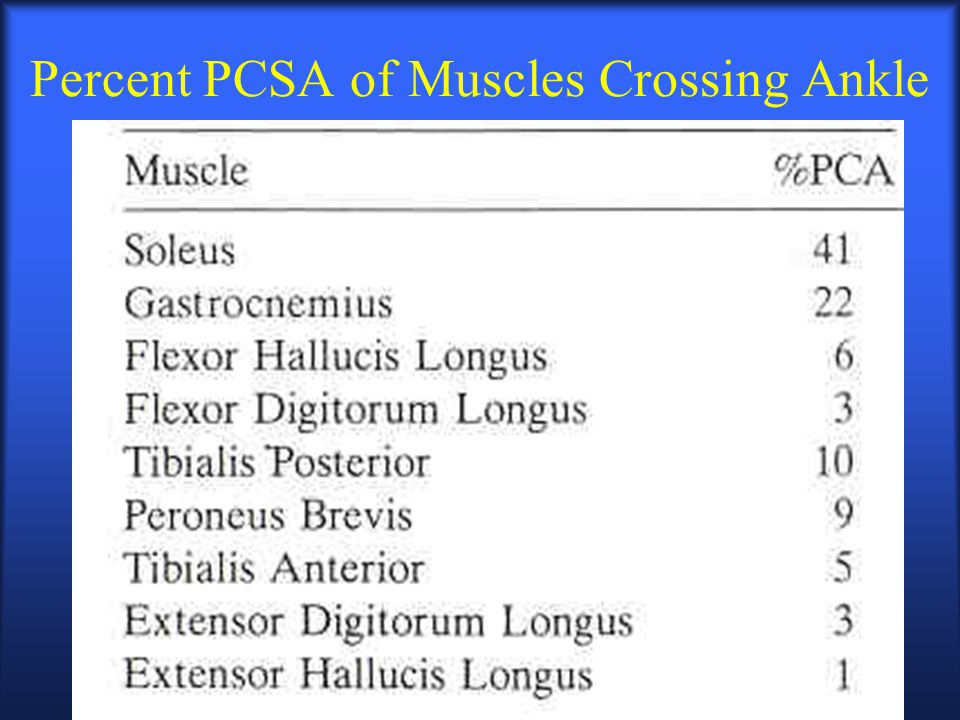 Percent PCSA of Muscles Crossing Ankle