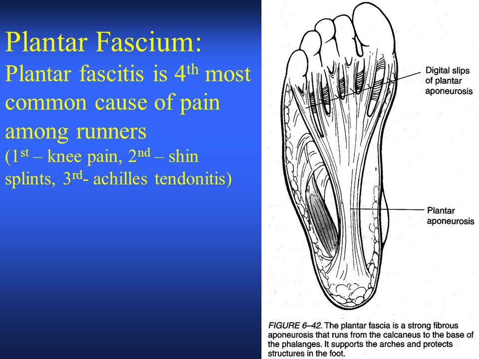 Plantar Fascium: Plantar fascitis is 4th most common cause of pain among runners (1st – knee pain, 2nd – shin splints, 3rd- achilles tendonitis)