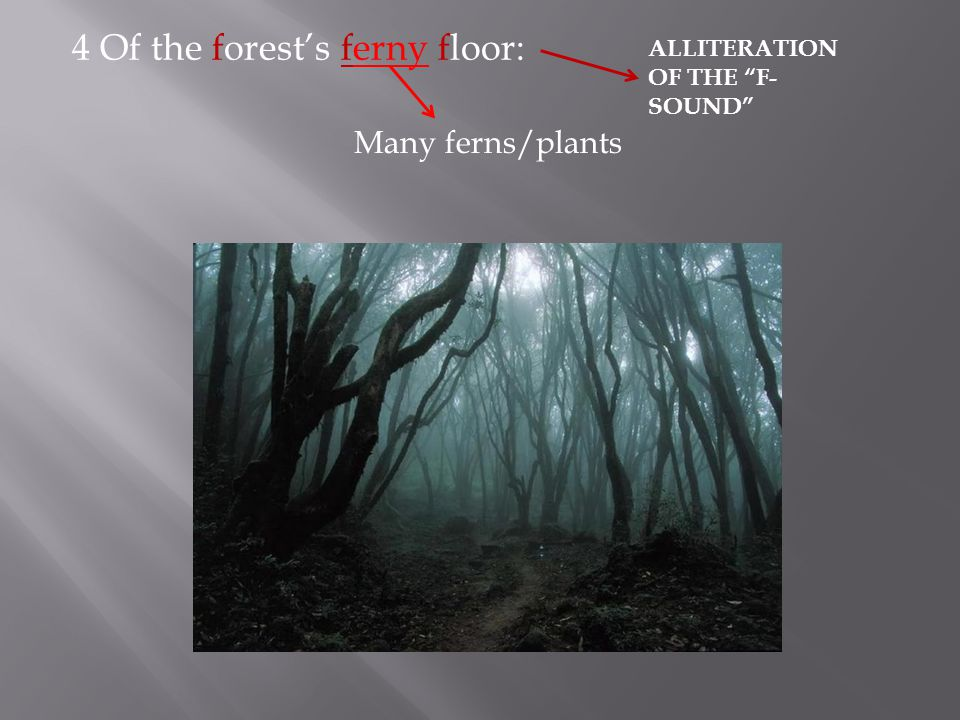 4 Of the forest's ferny floor: