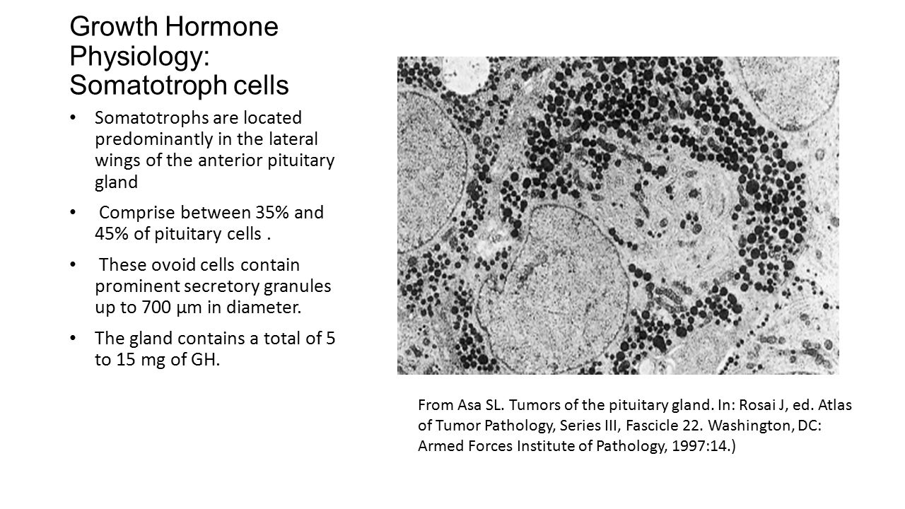 Growth Hormone Physiology: Somatotroph cells