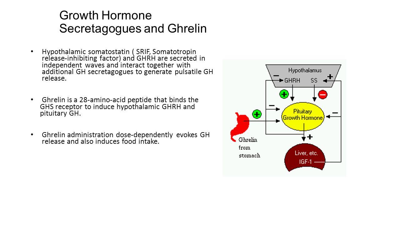 Growth Hormone Secretagogues and Ghrelin