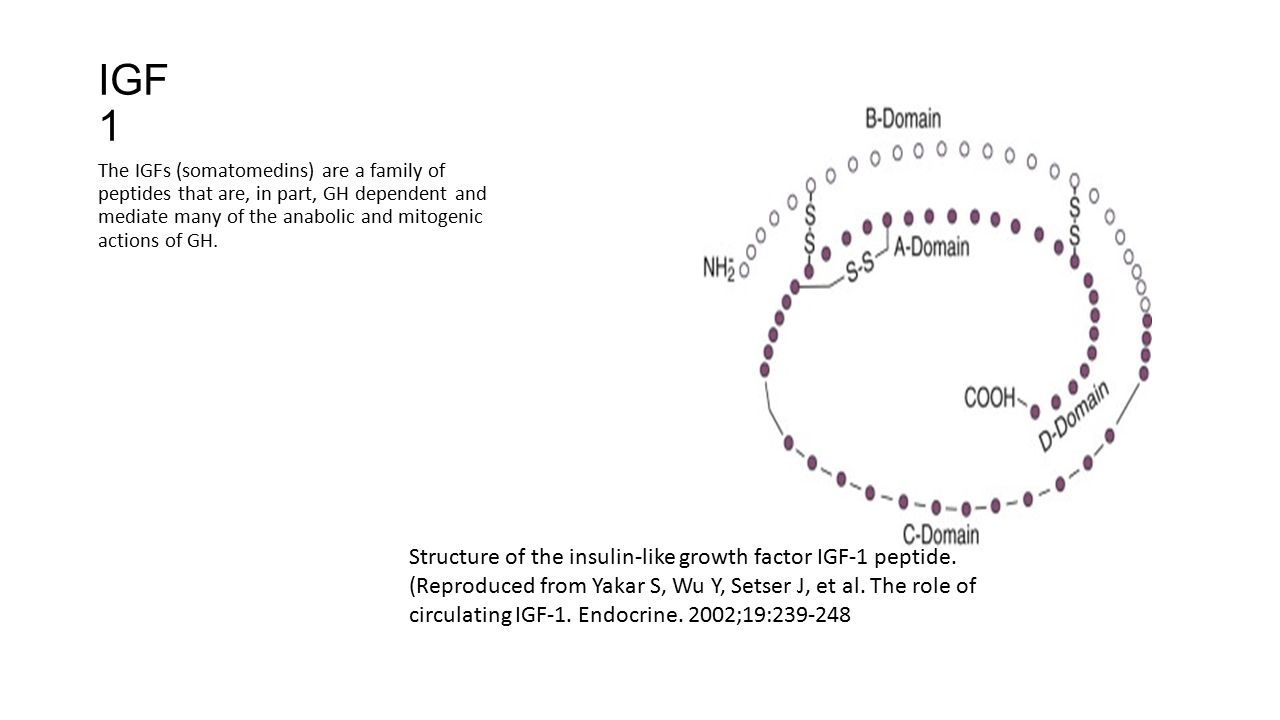 IGF1 Structure of the insulin-like growth factor IGF-1 peptide.