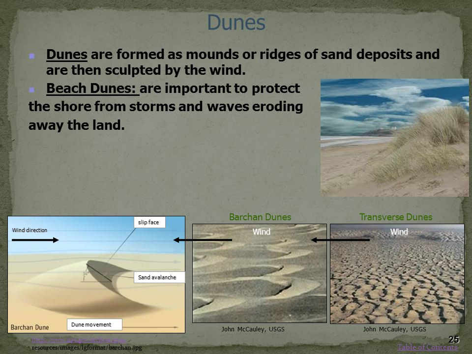 Dunes Dunes are formed as mounds or ridges of sand deposits and are then sculpted by the wind. Beach Dunes: are important to protect.