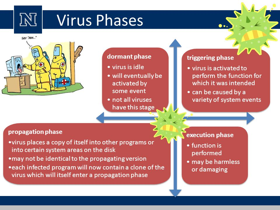 Virus Phases dormant phase triggering phase virus is idle